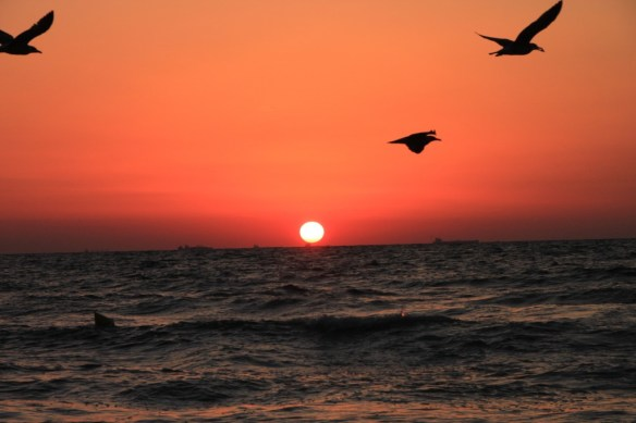 birds-flying-above-the-sea-at-sunrise__56028-1024x682