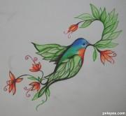 bird-of---paradise---4d0796e375215