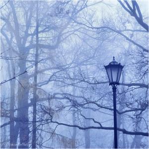 misty blue day